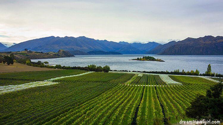 Vineyards and lake Wanaka, near Wanaka