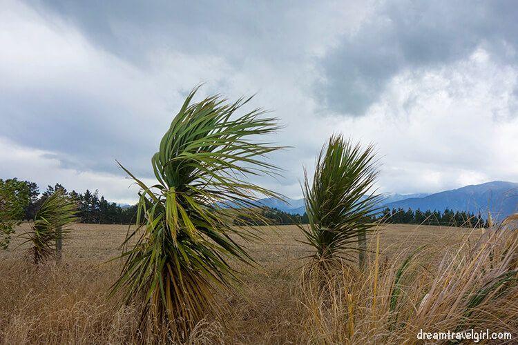 New-Zealand_Kaikoura_wind-on-peninsula