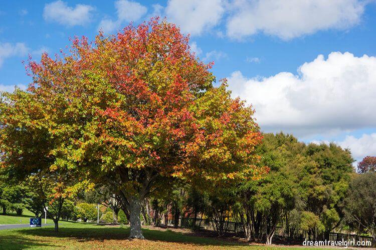 New-Zealand_Rotorua_Kuirau-park01