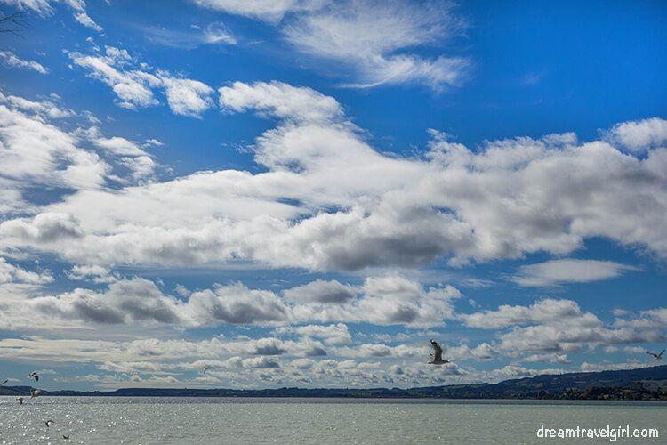 New-Zealand_Rotorua_Rotorua-lake05_birds