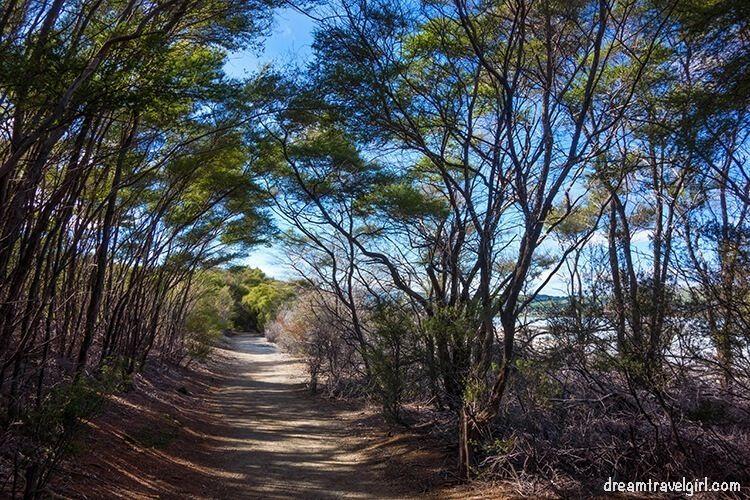 New-Zealand_Rotorua_Rotorua-lake_walking-trail