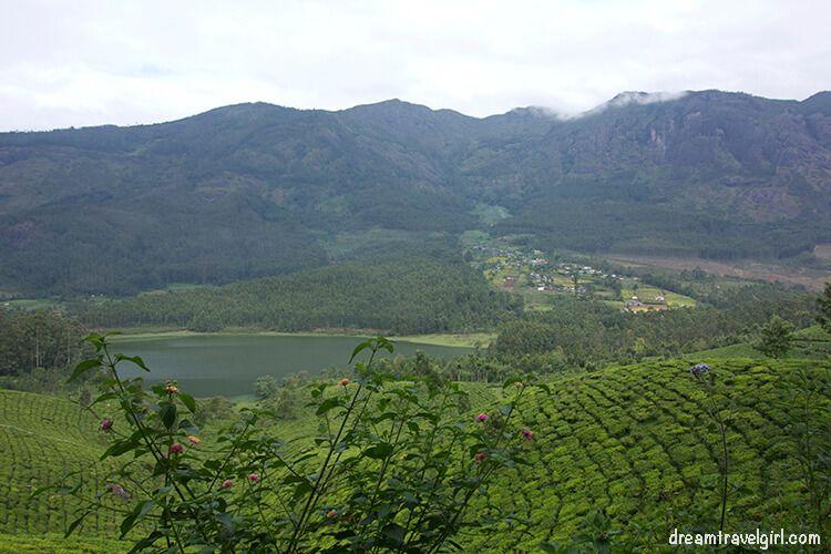 India_Munnar04_tea-plantations