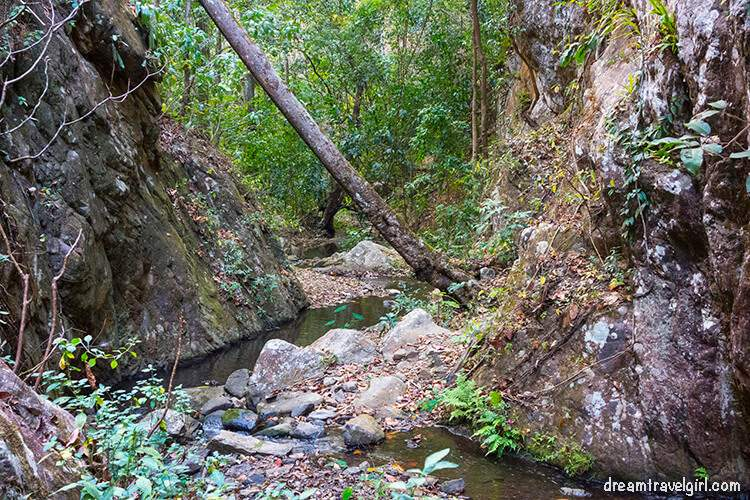 Jungle trekking, river the at the end of the loop