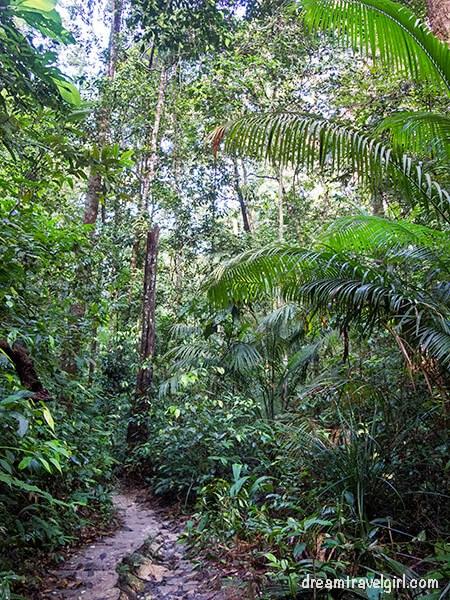 Jungle hiking in Penang National Park