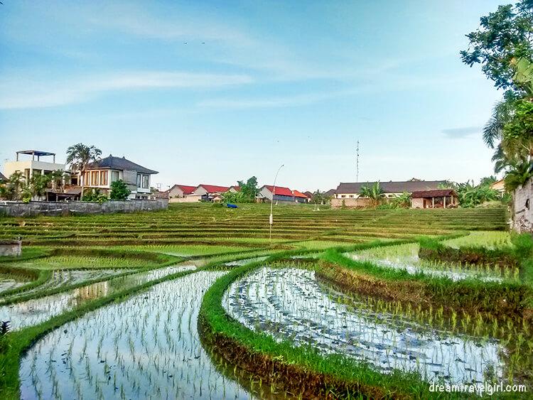Rice terraces in Canggu, Bali