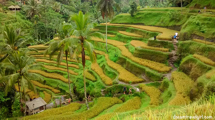 Tegalaland rice terraces, Ubud, Bali