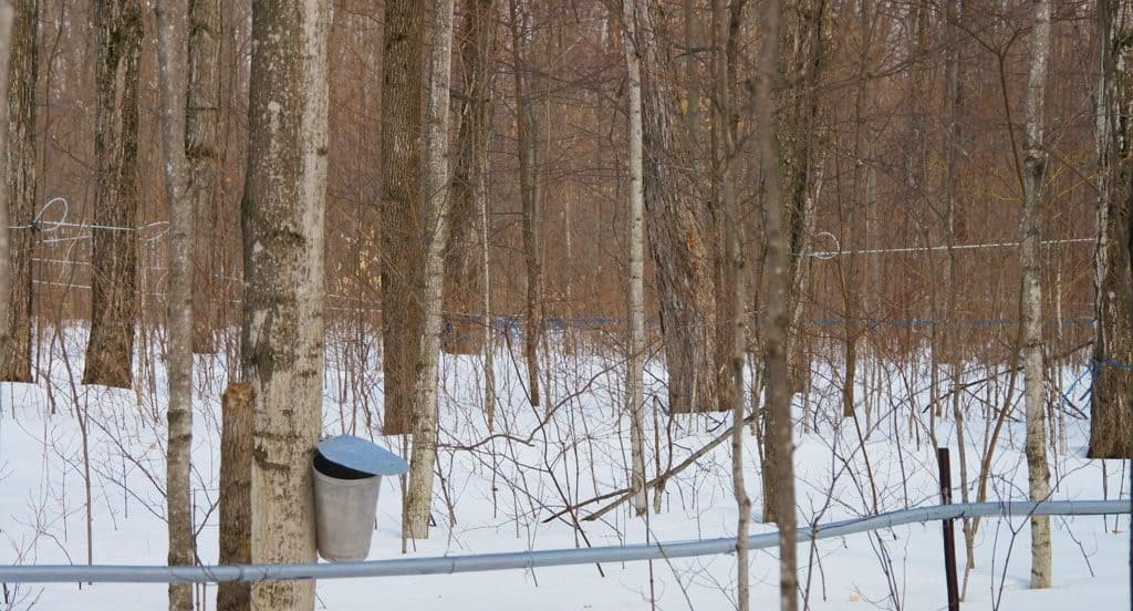 Tap-into-maple-Ontario-lakes-country_39