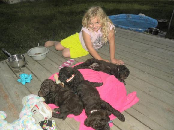 Olivia on the deck with the Labradoodle puppies