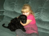 Olivia and Lucy - F1 Goldendoodle