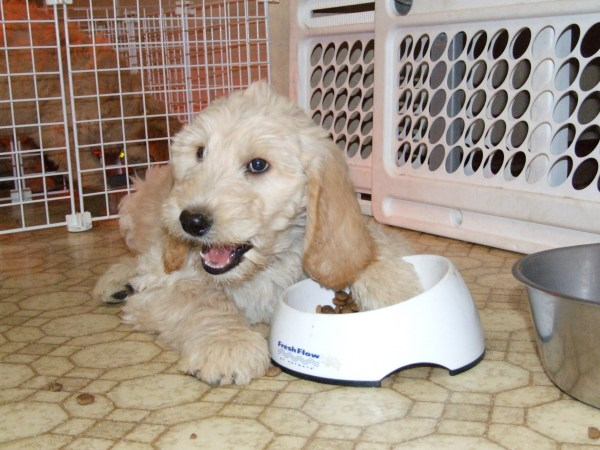 housebreaking a puppy  u2013 a time proven potty training routine