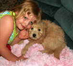 Olivia & Miss Honey - Medium F1 Goldendoodle