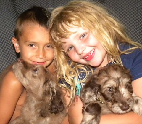 Aussiedoodle Puppies and my kids