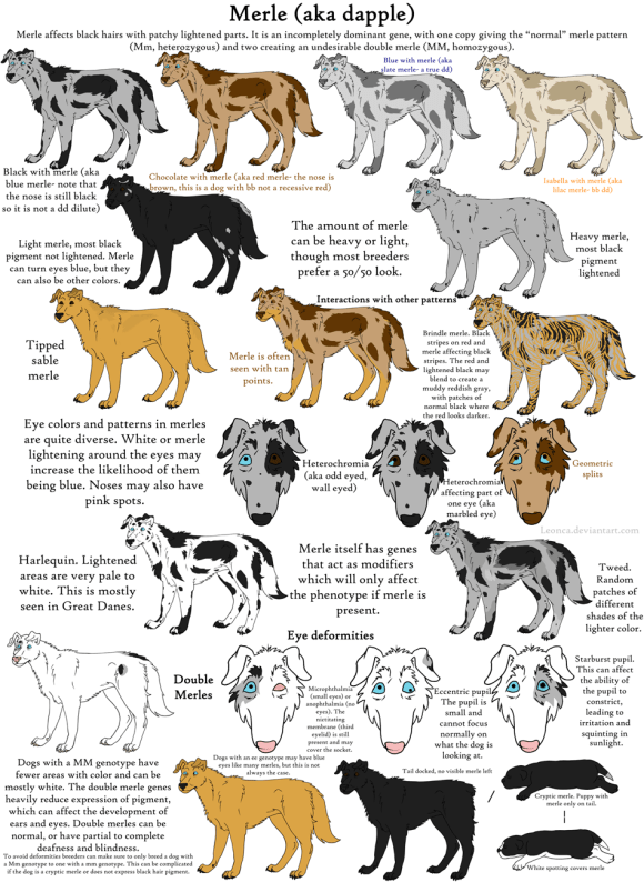 dog_colors_guide__merle_by_leonca-d3da4bm