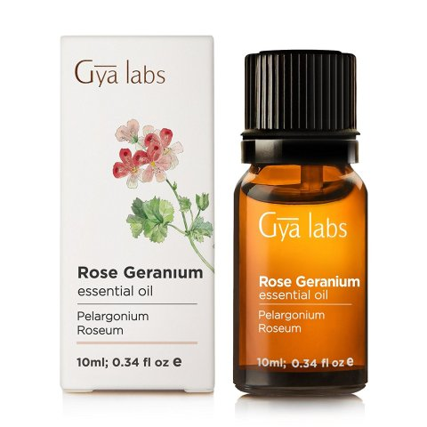 Rose Geranium Essential Oil for Fleas on Dogs