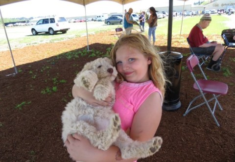 A trip to a public place.. here is Olivia at the Tulip Festival with Labradoodle Valentina