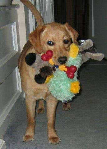 Do It Yourself Dog And Puppy Toys Diy Dog Toys