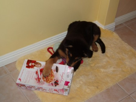 A cereal box with treats inside taped shut. (Destruction intended.)