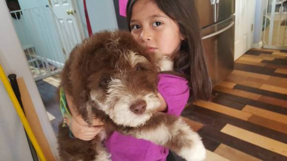 Sophia and Tuka the Aussiedoole Puppy - Crate Traing your Puppy