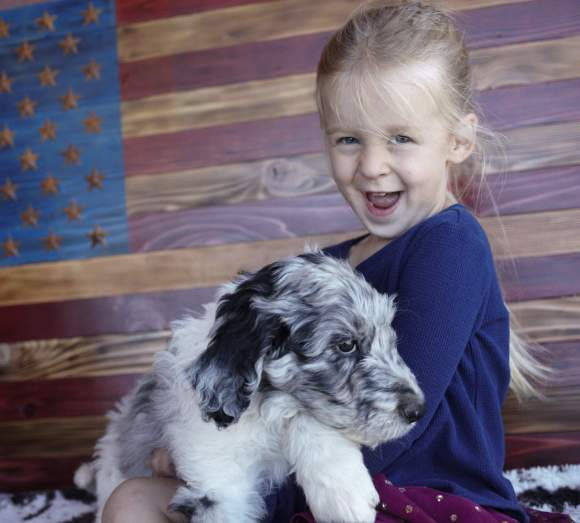 8 week old Aussiedoodle and little girl