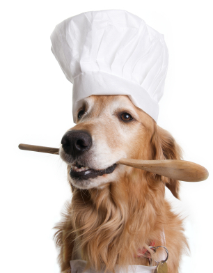 Best Dry Grain Free Dog Foods For Dogs Grain Allergies