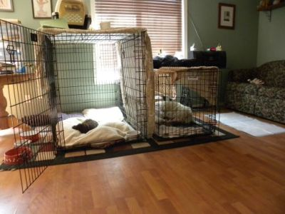 This is the biggest Kennel we have around here and then door is left open!