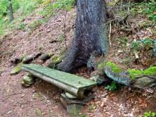 alte Holzbank am Baumstamm