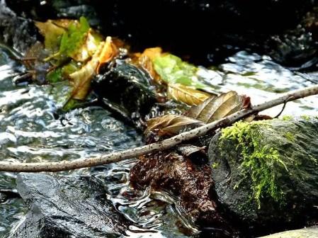 Bachlauf mit Steinen