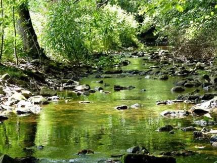 Weißeritz im Tharandter Wald