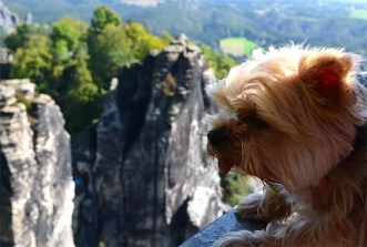 Hund am Felsen