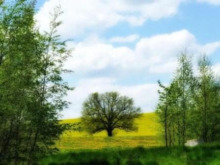 Landschaft mit Rapsfeld und Bäumen