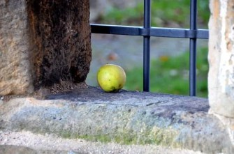 Einsamer Apfel