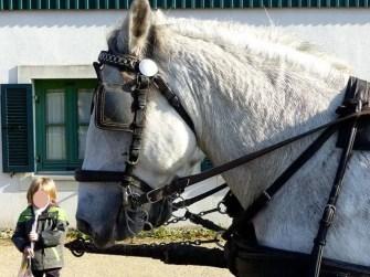 Pferd Fischerfest Moritzburg