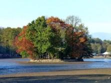 Bewaldete Insel ohne Wasser im Teich