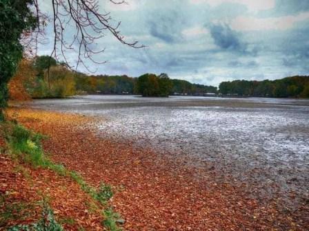 Teich ohne Wasser - Moritzburg