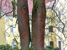 Bäume am Jagdschloss Grillenburg