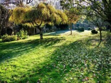 Garten mit Bäumen Wiese Laub Steinmauer