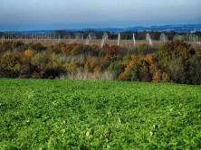 Feld Acker Bäume Landschaft