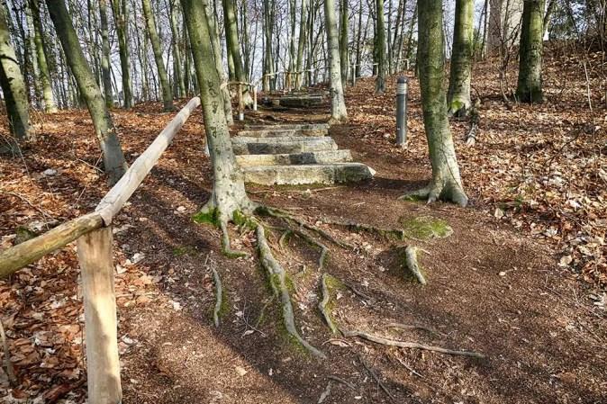 Waldweg Treppe Wurzeln Geländer Bäume