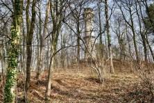 Koenig-Albert-Turm Weinböhla Wald