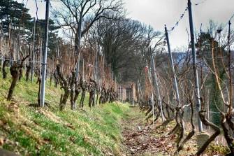Weinstöcke Weinberge