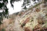 Wanderweg Landschaft