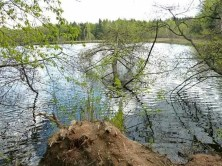 See Insel Bäume Ufer