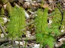 Jungpflanzen Bäume Wald