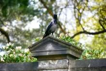 Vogel Urnenhain Tolkewitz Krematorium
