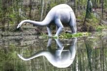 Saurier im Wasser - Mirror
