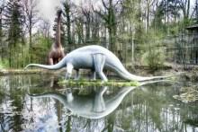 Saurier mit Spiegelbild im Wasser
