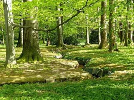 Bach Wald Bäume Schloss Pillnitz