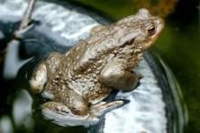 Frosch Wildpark Osterzgebirge