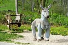 Esel für Kinder Wildpark Osterzgebirge