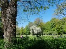 Carola See Natur Baum